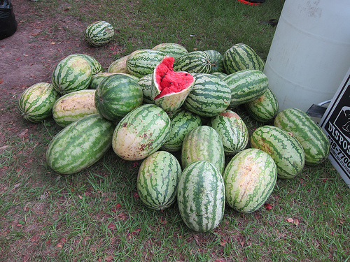 great watermelon